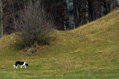 A dog on a hill. A dog relaxing and moving around to climb on a hill Stock Photography