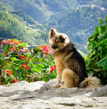 A dog on the hill Royalty Free Stock Image
