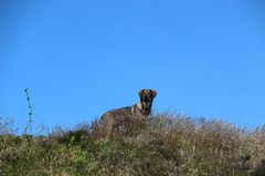 Dog on hill Royalty Free Stock Images
