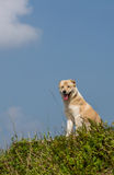 Dog on a hill Royalty Free Stock Photography