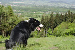 Dog on hill Stock Photo