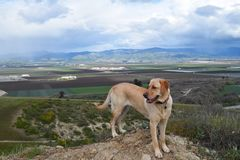 Dog with Hilltop View Royalty Free Stock Photo