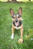 A Dog and His Ball Royalty Free Stock Images