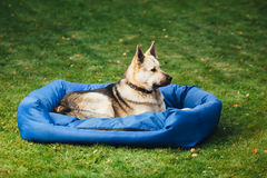 Dog on his bed, grass background Stock Photography