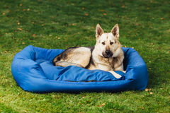 Dog on his bed, grass background Royalty Free Stock Photo