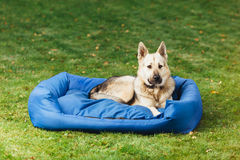 Dog on his bed, grass background Stock Images
