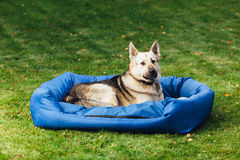 Dog on his bed, grass background Royalty Free Stock Image