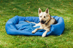 Dog on his bed, green grass background Royalty Free Stock Photos