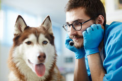 Dog and his doc Stock Image