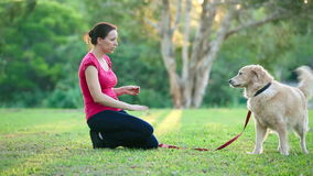 Dog and his female owner in the park doing shake stock video footage