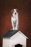 Dog on his house. Pet dog sits on top of his dog house Royalty Free Stock Photos