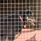 Dog in his kennel in a dog rescue centre Royalty Free Stock Photo