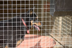 Dog in his kennel in a dog rescue centre Stock Photo