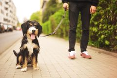 Dog and his owner - Cool dog and young man having fun in a park - Concepts of friendship, pets, togetherness.Man with his dog play Royalty Free Stock Images