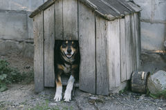 Dog in his wooden house. Stock Photography