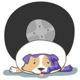 Dog hit by car accident  illustration. Dog splinting leg with elizabeth collar Royalty Free Stock Photos