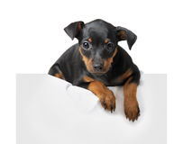 Dog hold empty pape Royalty Free Stock Photography