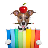 Dog and books stock image