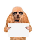 Dog holding a blank banner Stock Images