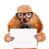 Dog holding a blank banner Royalty Free Stock Photos