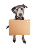 Dog Holding Blank Cardboard Sign Stock Image