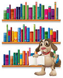 A dog holding a book in front of the bookshelves. Illustration of a dog holding a book in front of the bookshelves on a white background royalty free illustration