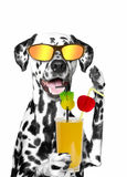 Dog holding a cocktail. summer, beach, sun, heat. Isolate on white background Stock Photo