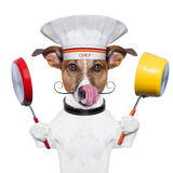 Dog cook chef Stock Photo
