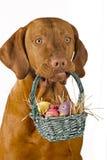 Dog holding easter basket royalty free stock photo