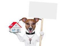 Banner dog home and key Stock Image