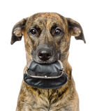 Dog holding empty purse  in its mouth. isolated on white Royalty Free Stock Images