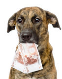 Dog holding euro in its mouth.  on white background Royalty Free Stock Images