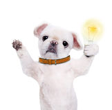 Dog holding a glowing light bulb. Royalty Free Stock Photos