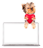 Dog holding heart with �omputer. Valentine puppy dog holding heart with �omputer Royalty Free Stock Images