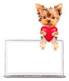 Dog holding heart with �omputer Stock Image