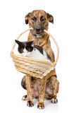 Dog holding in its mouth basket with a cat. isolated on white Royalty Free Stock Images