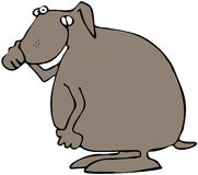 Dog Holding Its Nose. This illustration depicts a brown dog with a pained expression holding its nose Royalty Free Stock Photo