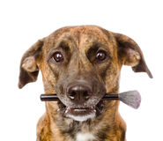 Dog holding  makeup brush in its mouth.  on white Stock Photography