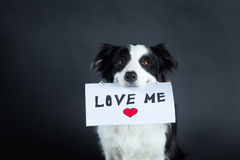 Dog holding a piece of paper with lettering Stock Image