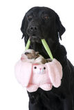 Dog holding a puppy in a basket Stock Images