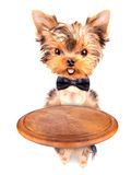 Dog holding service tray Stock Photography