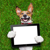 Dog holding tablet Stock Images