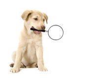 Dog holding in teeth a magnifying glass Stock Photo