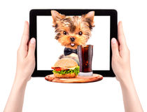 Dog holding tray with food on a tablet Stock Images