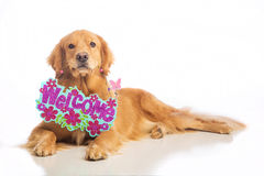 Dog holding welcome sign Stock Photo