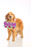 Dog holding welcome sign Stock Image
