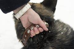 dog holding woman Στοκ Φωτογραφία