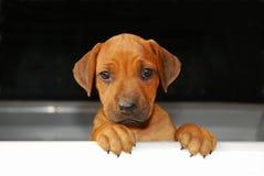 dog holdingtecknet Arkivbilder