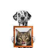 Dog holds a portrait of cat in its paws. Isolate on white background royalty free stock image