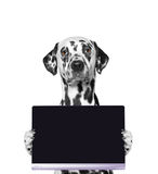 Dog holds a tablet or laptop. Isolate on white background Royalty Free Stock Photo